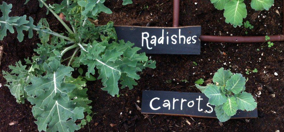 'Vida! Gardening': The School year is half over!  Let's check in